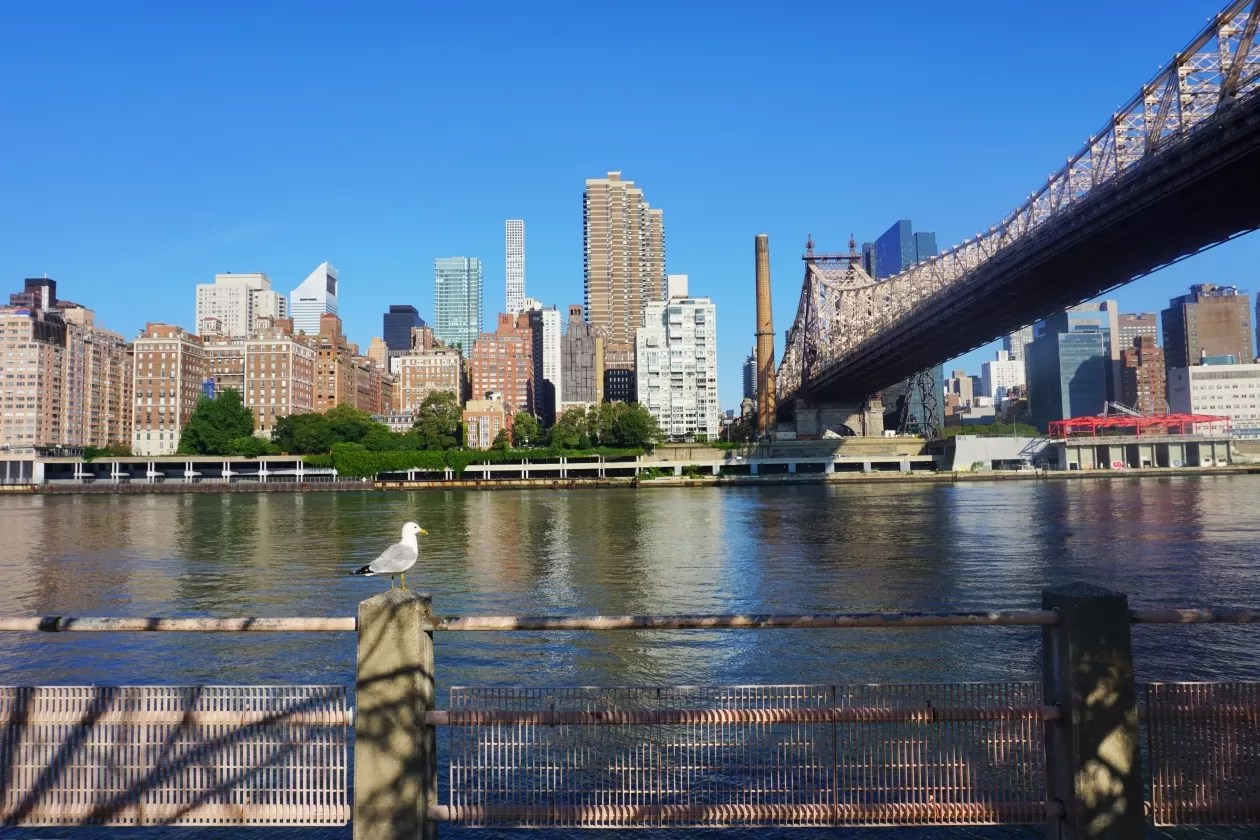 Roosevelt Island Queensboro Bridge New York