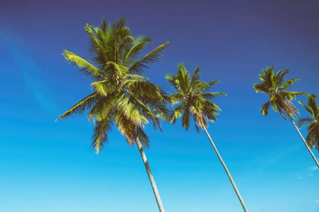 Vlaamse reisbloggers palmbomen