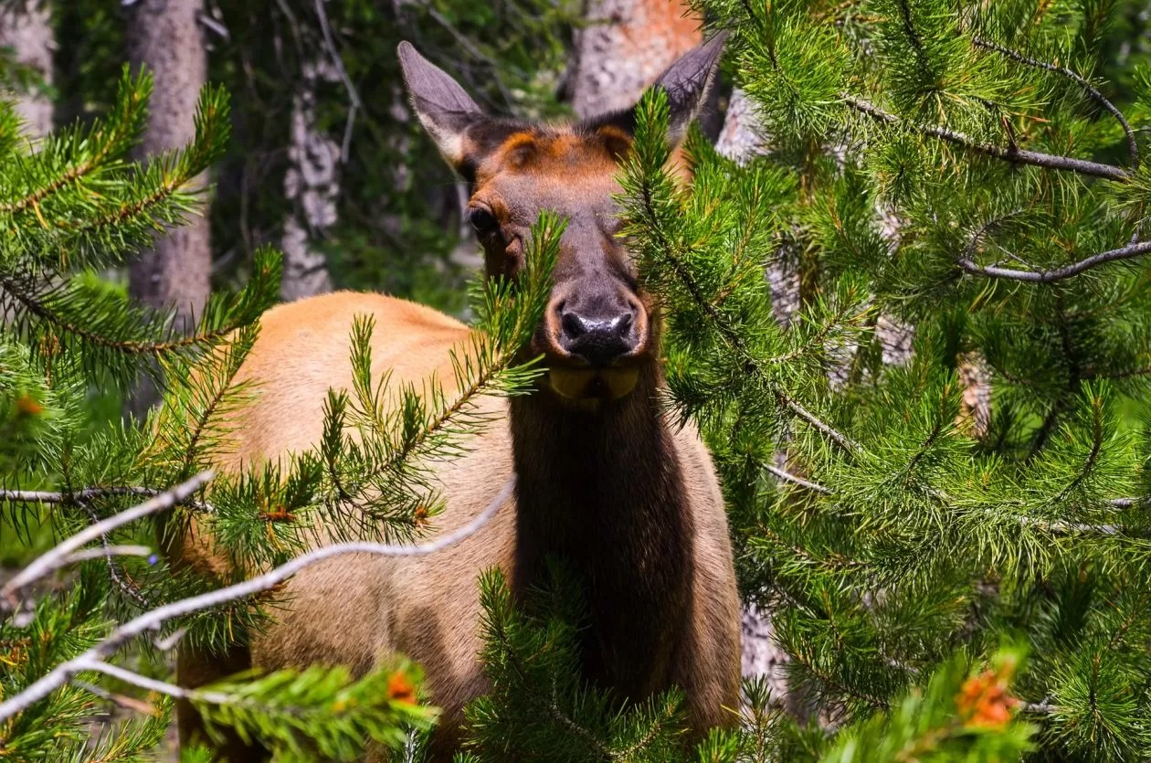 Vlaming in VS: sommige nationale parken hadden nood aan deze time-out