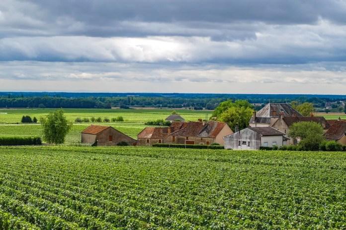 velden en wijngaarden in bourgogne