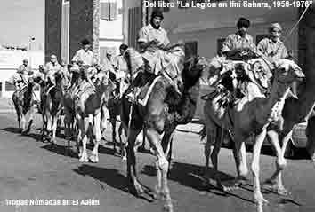 Camello en el Aaiún