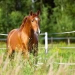 Horse Breeds In Australia