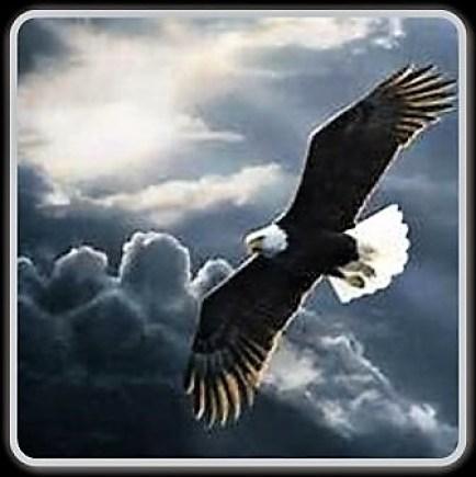 flying-eagle-copy
