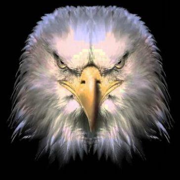 disturbed eagle