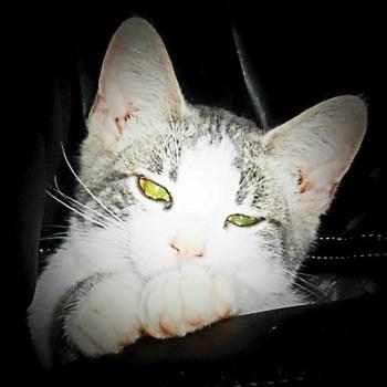 Ugly Kid Joe - Cat's in the Cradle
