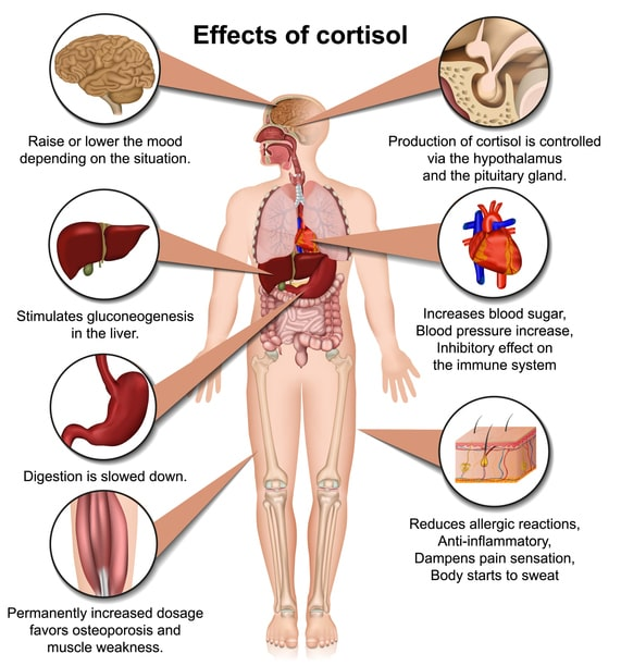 cortisol cortisol levels what is cortisol how to lower cortisol low cortisol levels  what is cortisol how to lower cortisol how to reduce cortisol what does cortisol do how to lower cortisol levels  cortizol cortisol what is it what is cortisol what is cortisol hormone cortisol hormone oxytocin what is oxytocin oxytocin side effects oxytocin function oxytocin definition  what is oxytocin what does oxytocin do where is oxytocin produced how to increase oxytocin how to release oxytocin in a man  oxytocine oxitocin about oxytocin ocytocine hormone oxytocin hormone