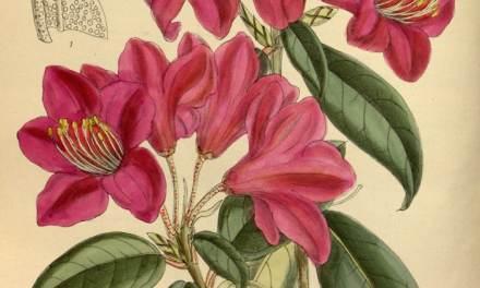 Biodiversity Heritage Library Puts 2 Million Botanical Illustrations Online for Free