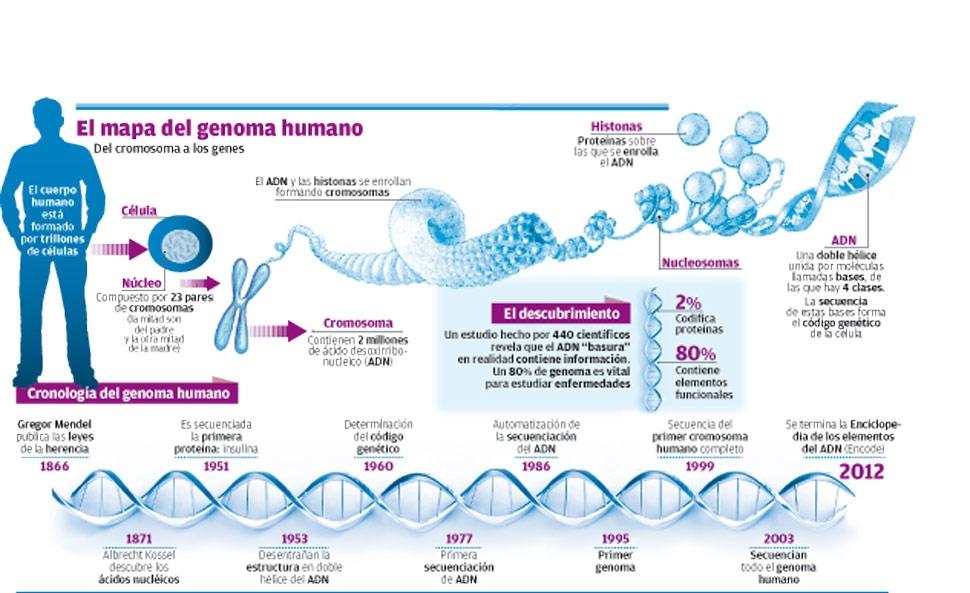 Organización Del Genoma Humano Genoma Humano
