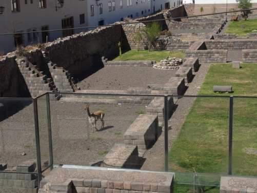 ペルー 南米生息動物 ビクーニャ