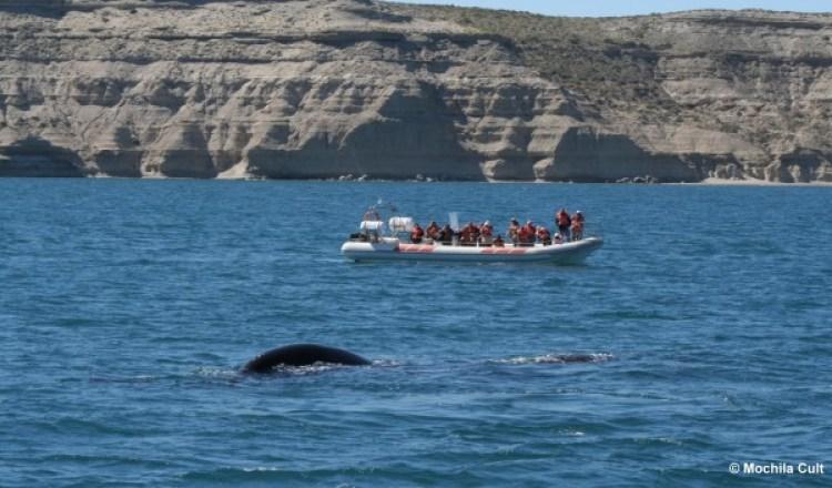 madryn baleias