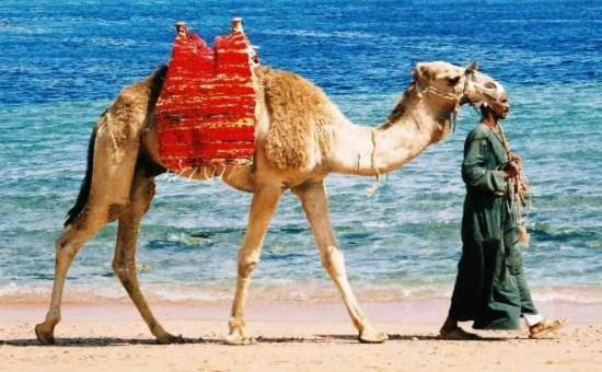 Sharm el Sheikh Crociera sul Nilo: informazioni e escursioni