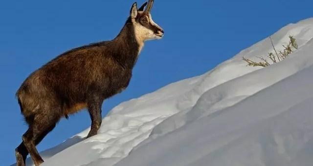 Campo Felice: neve nel Parco Nazionale d'Abruzzo