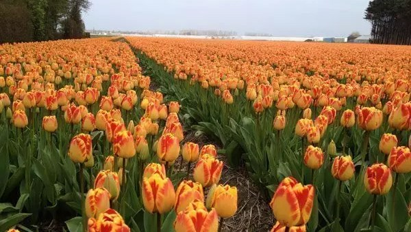 Feel Orange, vinci un fine settimana in Olanda