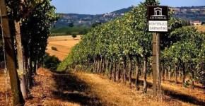 InMontefalco, Blogtour alla scoperta del Sagrantino