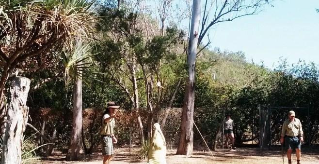 Koala, canguri e non solo al Billabong Sanctuary di Townsville