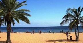 Tenerife, i tropici low cost a Privavera
