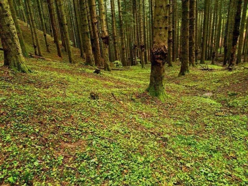 foreste-casentinesi-emilia-romagna