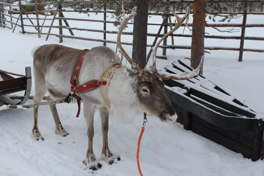 finlandia.renne