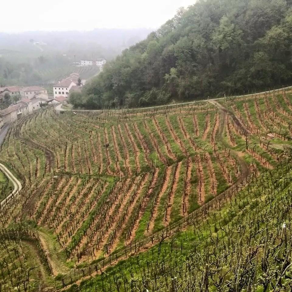 conegliano-vitigni
