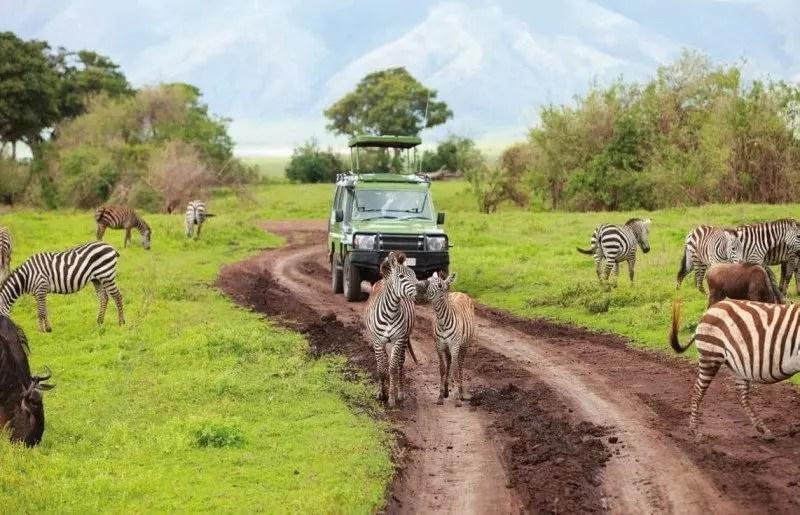 tanzania-in-safari