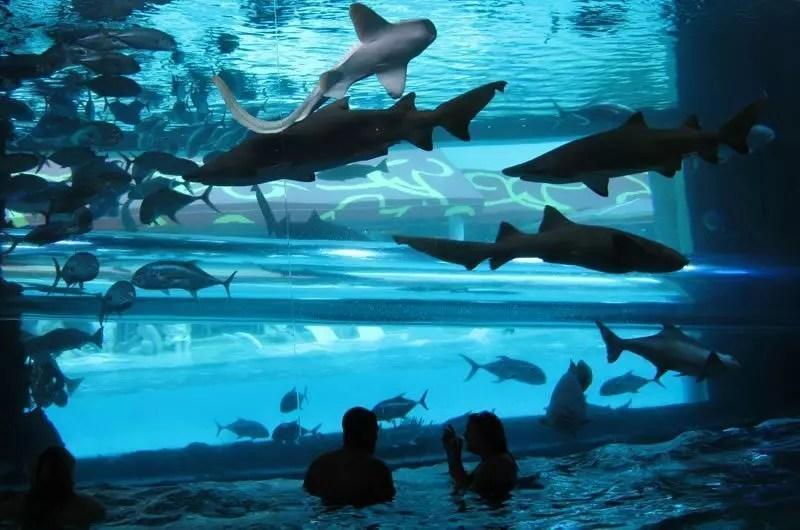 sharkpool