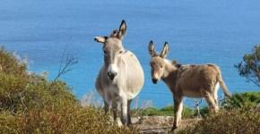 Isola dell'Asinara: le spiagge più belle in Sardegna