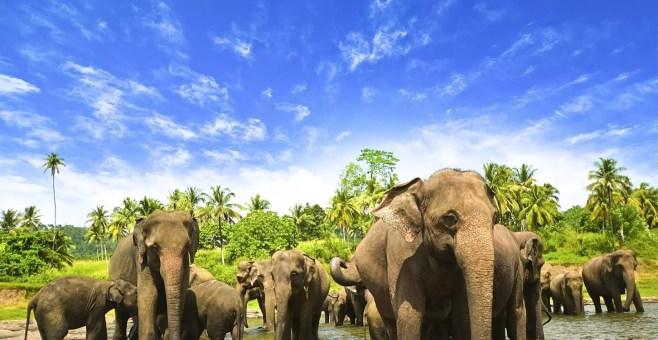 5 motivi per visitare lo Sri Lanka