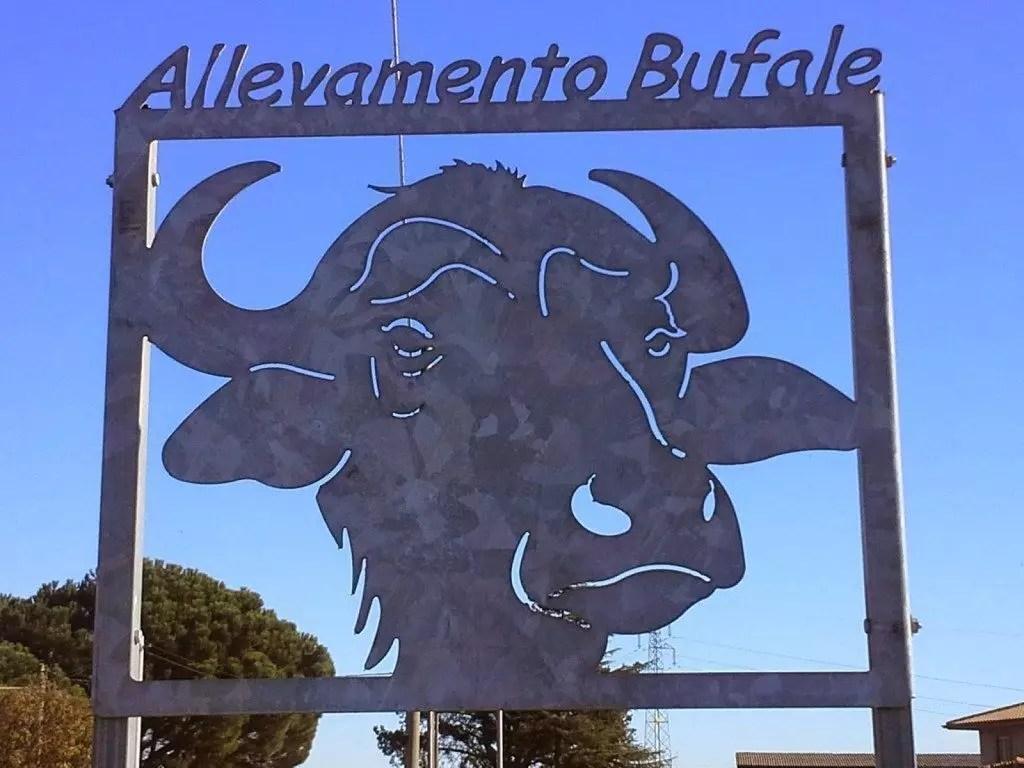 bufale-allevamento