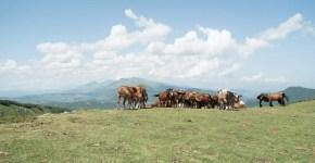 Consigli per un weekend al Lago di Campotosto in Abruzzo