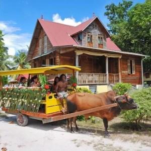 Seychelles tutto l'anno: eventi mese per mese