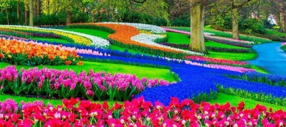 Amsterdam, 5 posti dove vedere i Tulipani a maggio