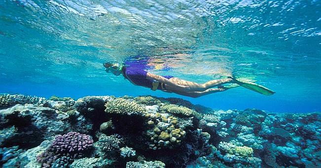 Snorkeling sulla barriera corallina di Abu Qifan, nei pressi di Safaga.