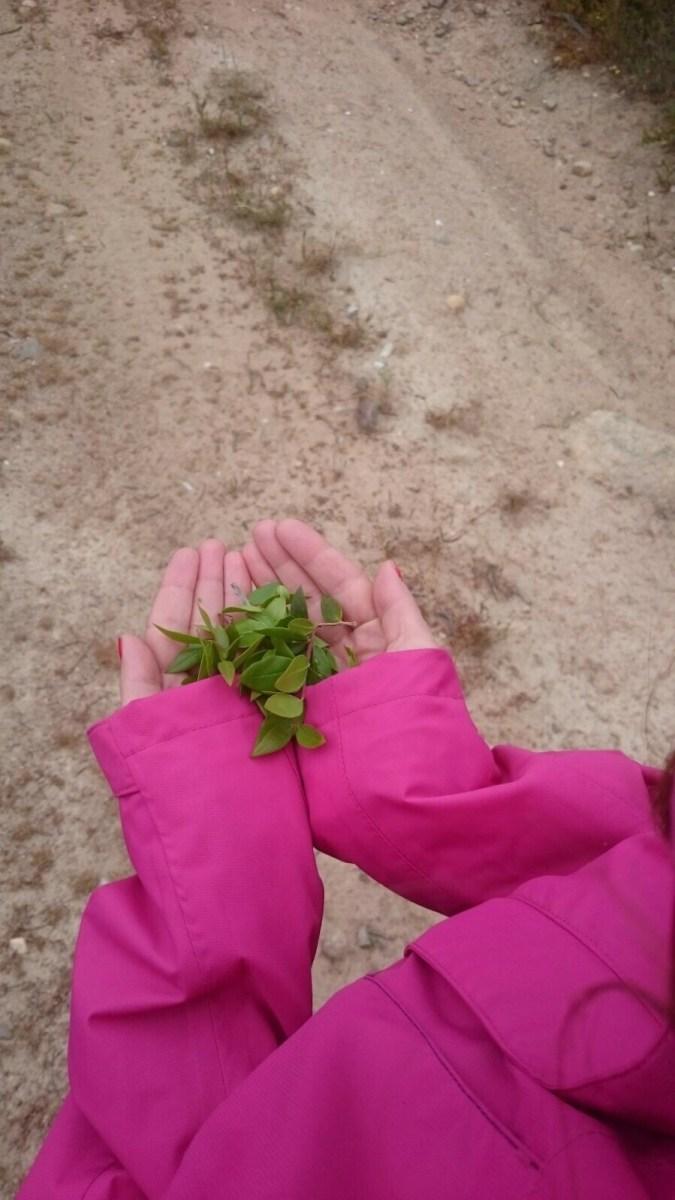 Sardegna,il profumo delle foglie di mirto tra le mani