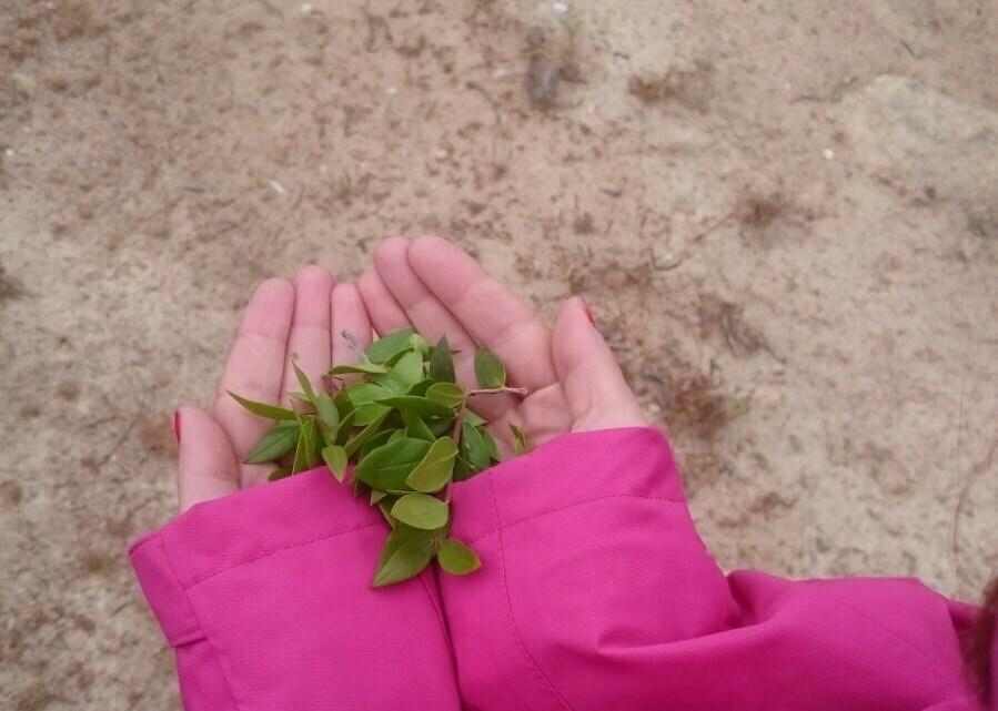 Cala Gonone, il profumo di foglie di mirto tra le mani