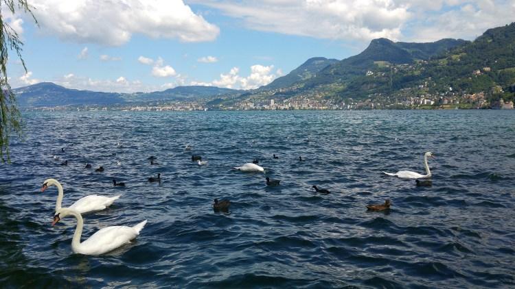 lago di ginevra nella svizzera francese