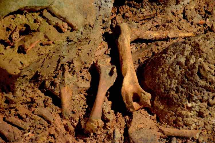 cimitero degli orsi grotte di toirano