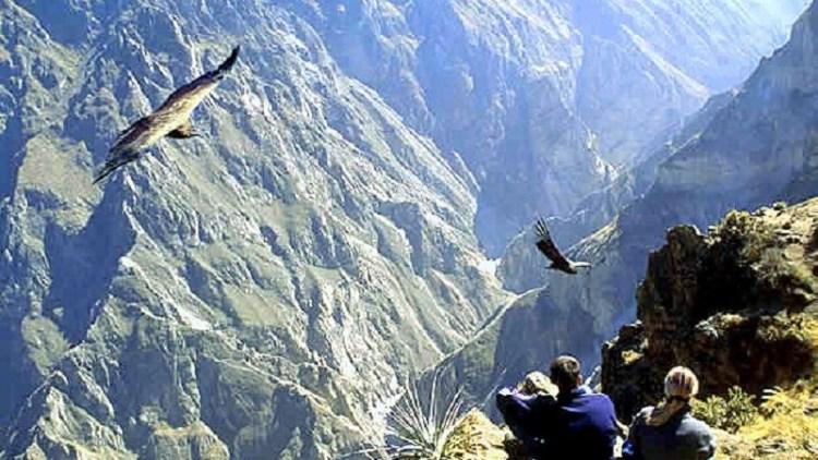 volo del condor nella valle del colca vicino ad arequipa
