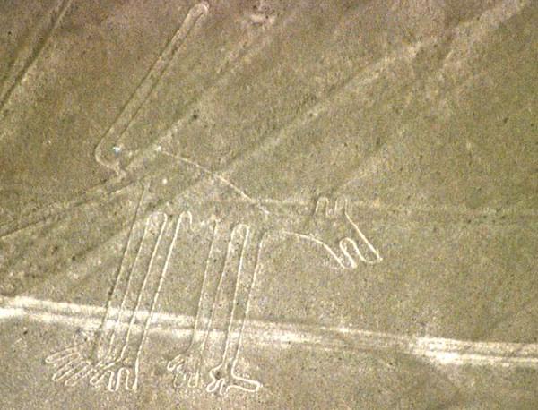 il cane figura delle Linee di Nazca