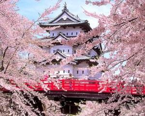 la fioritura dei ciliegi nel giardino di un tempio giapponese