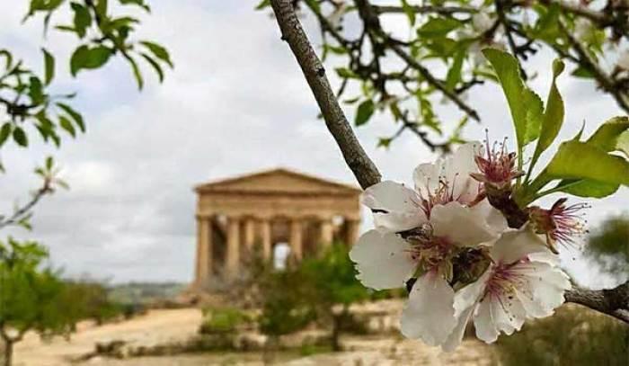il paesaggio della valle dei templi durante la festa del mandorlo in fiore