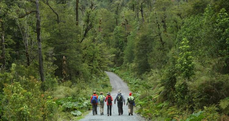 larici millenari al parco nazionale alerce andino