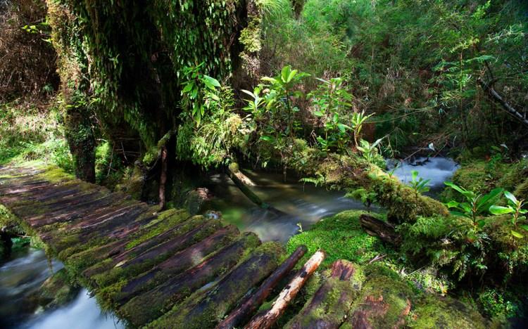 il sentiero cascada del parco pumalín douglas tompkins