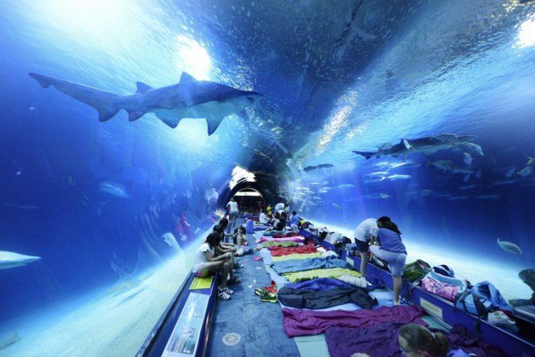 tutti pronti a dormire con gli squali nel tunnel dell'acquario di valencia