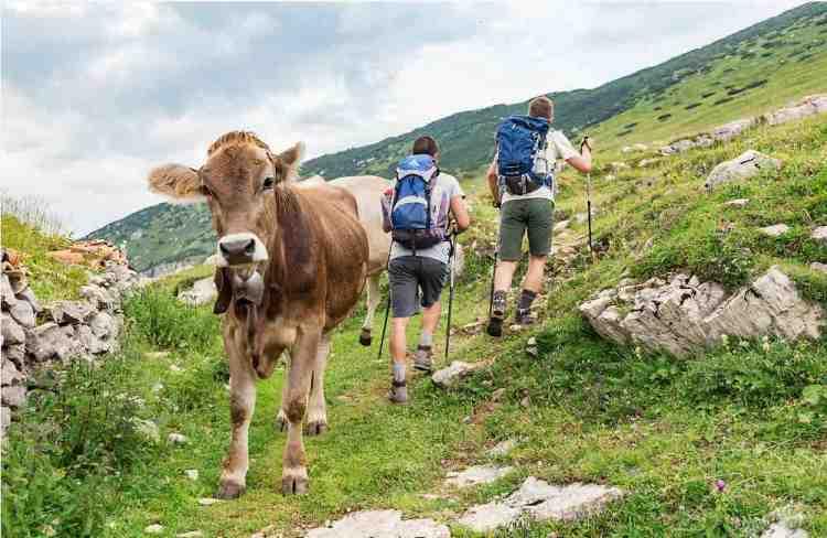 trekking nei sentieri naturali in quota del garda trentino