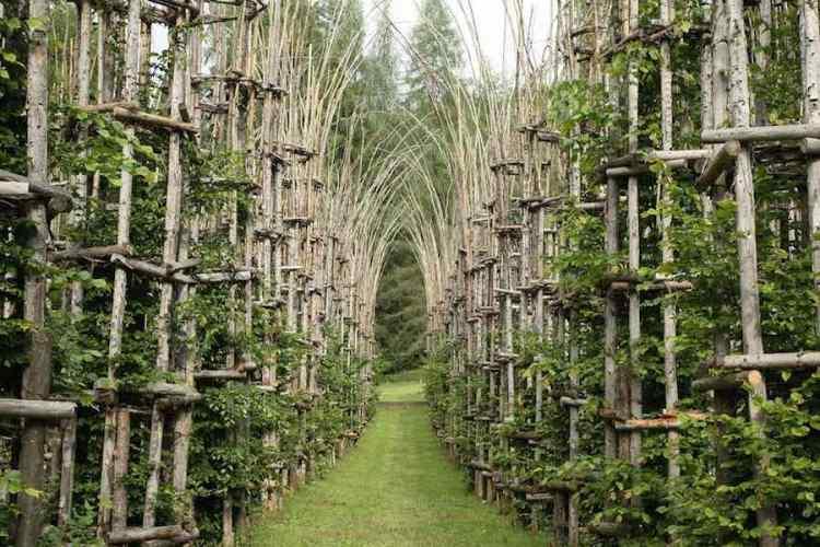 la cattedrale vegetale di giuliano mauri, la più celebre installazione di Arte Sella