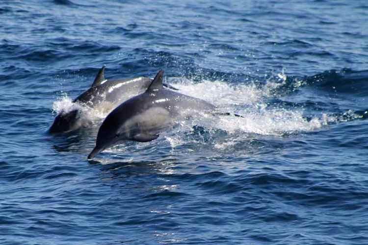 le acque del santuario dei cetacei delle cinque terre