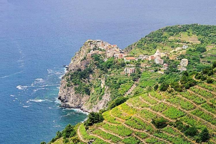 il mare e la collina con i terrazzamenti delle cinque terre
