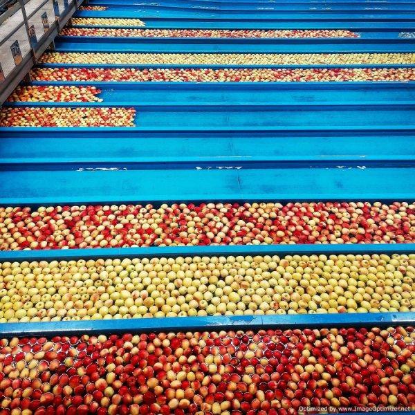 Selezione delle mele