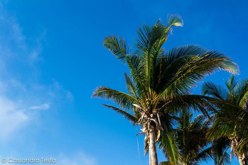 Le palme di Cococay