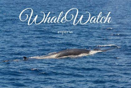WhaleWatch Imperia, un'esperienza unica ed emozionante